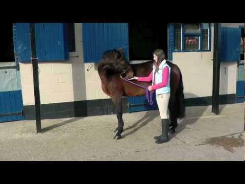 More stretches for your pony with Likit Snax | PONY Magazine