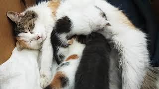 Коты воюют)