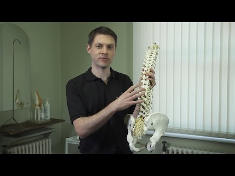hqdefault - Back Pain Sickness Absence