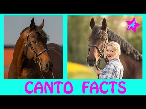 Cantos kleines GEHEIMNIS I 22 FAKTEN über CANTO I 20 facts about canto