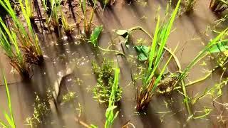 Awalnya 2 anak ini membendung aliran air  WOOWW lihat apa yang terjadi kemudian    !!!