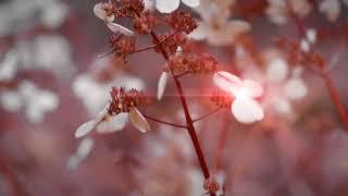 "Björk - ""I Miss You"" (Dobie Rub Part One - Sunshine Mix)"
