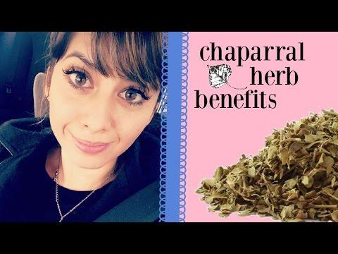 Chaparral Herb Benefits   Naturally Increase Circulation!