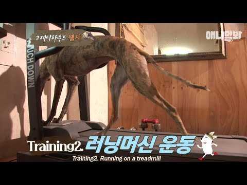 A dog dreaming to be a runner like Usain Bolt?