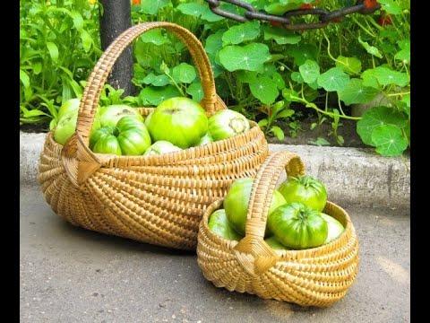 Что делать с зелеными помидорами?