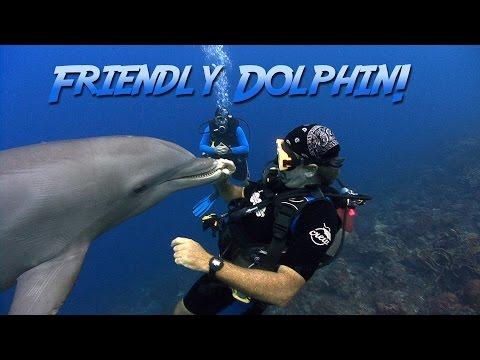 Friendly Bottlenosed Dolphin | JONATHAN BIRD