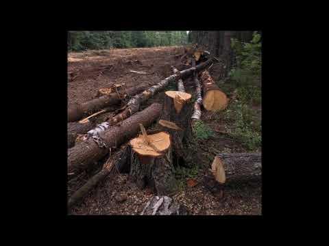 Тревога - рядом с Поварово (Солнечногорск) рубят лес. Под полигон?!