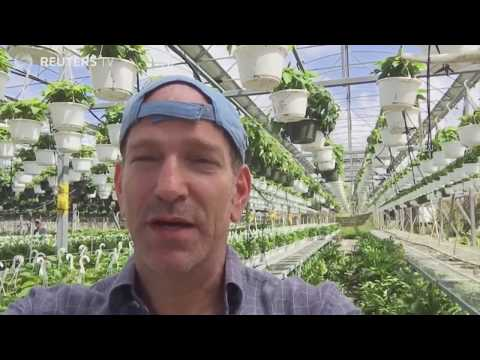 Solar energy news USA: Energy production in Puerto Rico! Hector Santiago's GREENHOUSE.