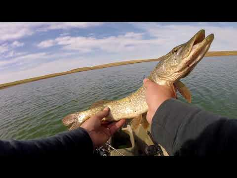 Western South Dakota Fishing:  Newell Lake - Pike