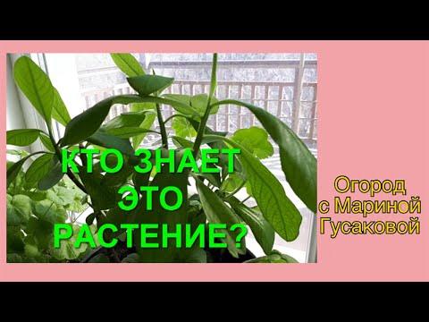 381. 🌵☘🌴 Как определить название растения?