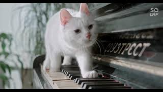 ADORABLE CATS COMPILATION||PLAYING CATS||CUTE CATS