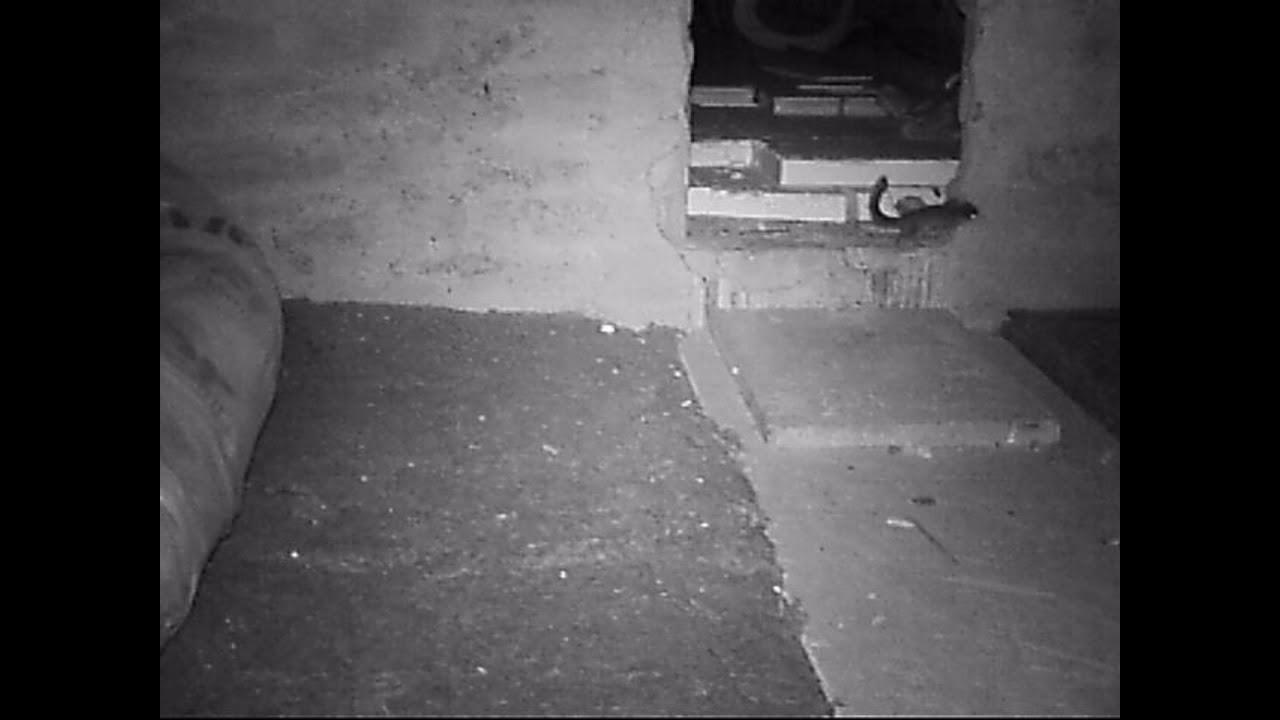 Siebenschlafer Auf Dem Dachboden Youtube