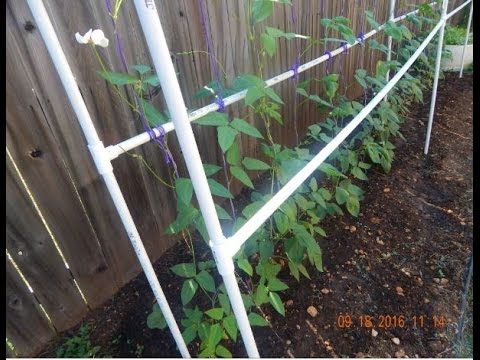How To Grow Long Beans