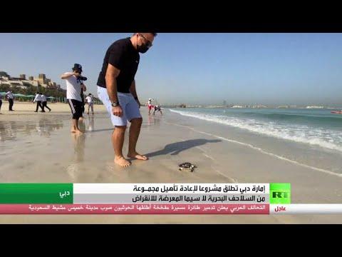 مشروع في دبي لإعادة تأهيل السلاحف البحرية  - نشر قبل 11 ساعة