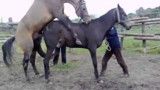 Mating Horse | Time For Riding | Horses Mating