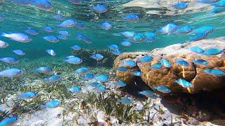 Подводный мир на Занзибаре. Коралловый риф.