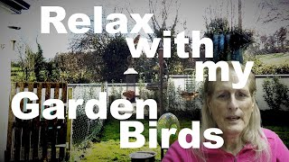 Relax with my Garden Birds