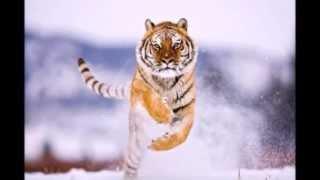 Прекрасные животные планеты земля.(Beautiful animals of planet earth)