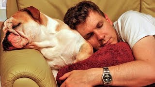Dog Want Sleep in Owners Bed Compilation 2018
