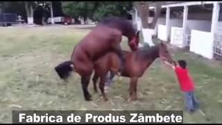 Позор коня ,лошади в шоке))))))