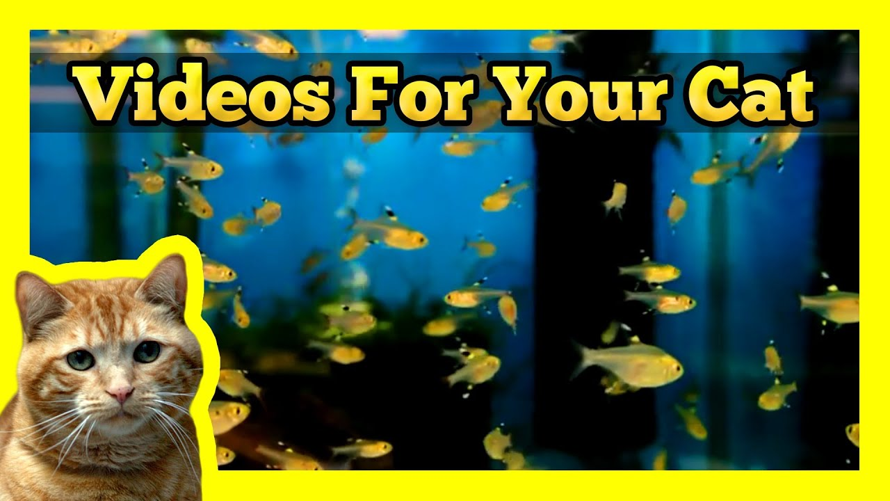 Videos for your cat yellow tetra fish tank youtube for Fish videos for cats