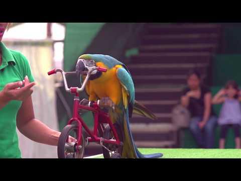 Dubai Dolphinarium Exotic Bird Show