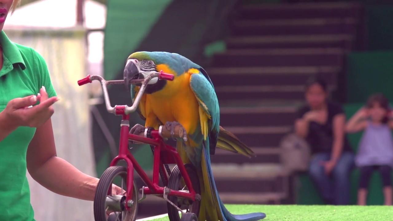 Exotic Bird Show In Atlanta 98