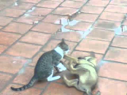cuộc chiến giữa chó và mèo 2