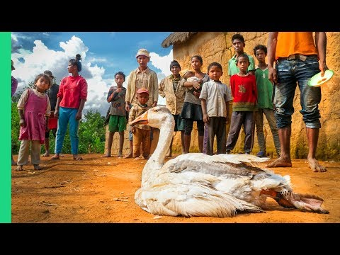 1 Goose/25 People!!! Food of Madagascar!!!