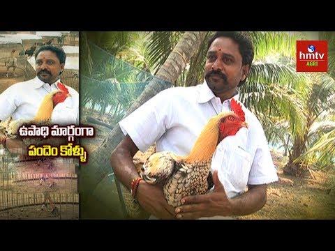 పందెం కోళ్ల పెంపకం | Venkat Raju Pandem Kollu (పందెం కోళ్ల ) Farming Success Story | hmtv Agri
