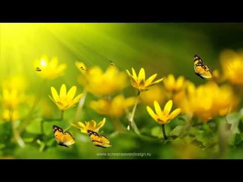 Бабочки, мотыльки, моли обои для рабочего стола, картинки