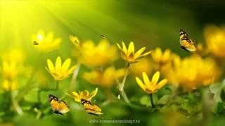 Анимированные обои для рабочего стола   Цветы, бабочки!