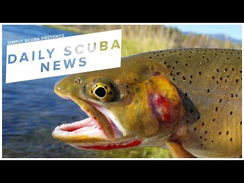 Daily Scuba News - Parks Canada Are Using Chemicals To Remove Fish
