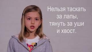 Видеоурок Ответственное отношение к животным (возрастная группа 7-10 лет)