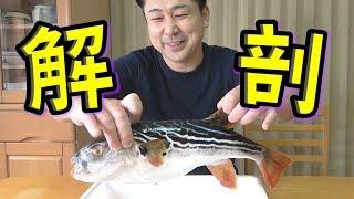 【実技試験】フグの有毒部位と食用部位を解説しつつ美味しさを伝えます!!
