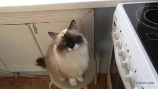 Как выглядит кот в 18 лет.  Няшный Кузя