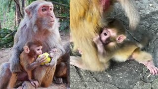 Some Mothers Monkey Very Goodness For Baby