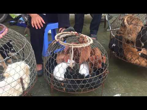 Chợ Phiên Chó Mèo Hà Đông