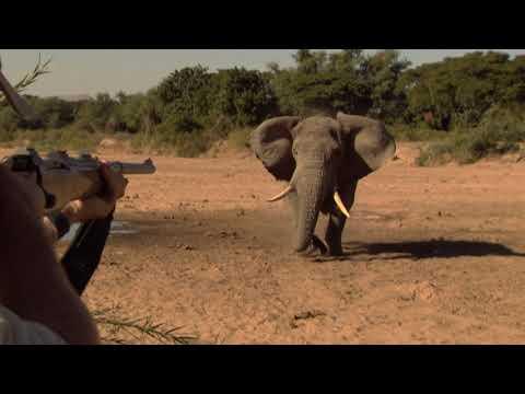 World's Greatest Elephant Hunts