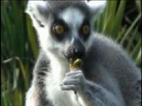 Ecocide-- Mass Species Extinction: Madagascar #8-- RED ...