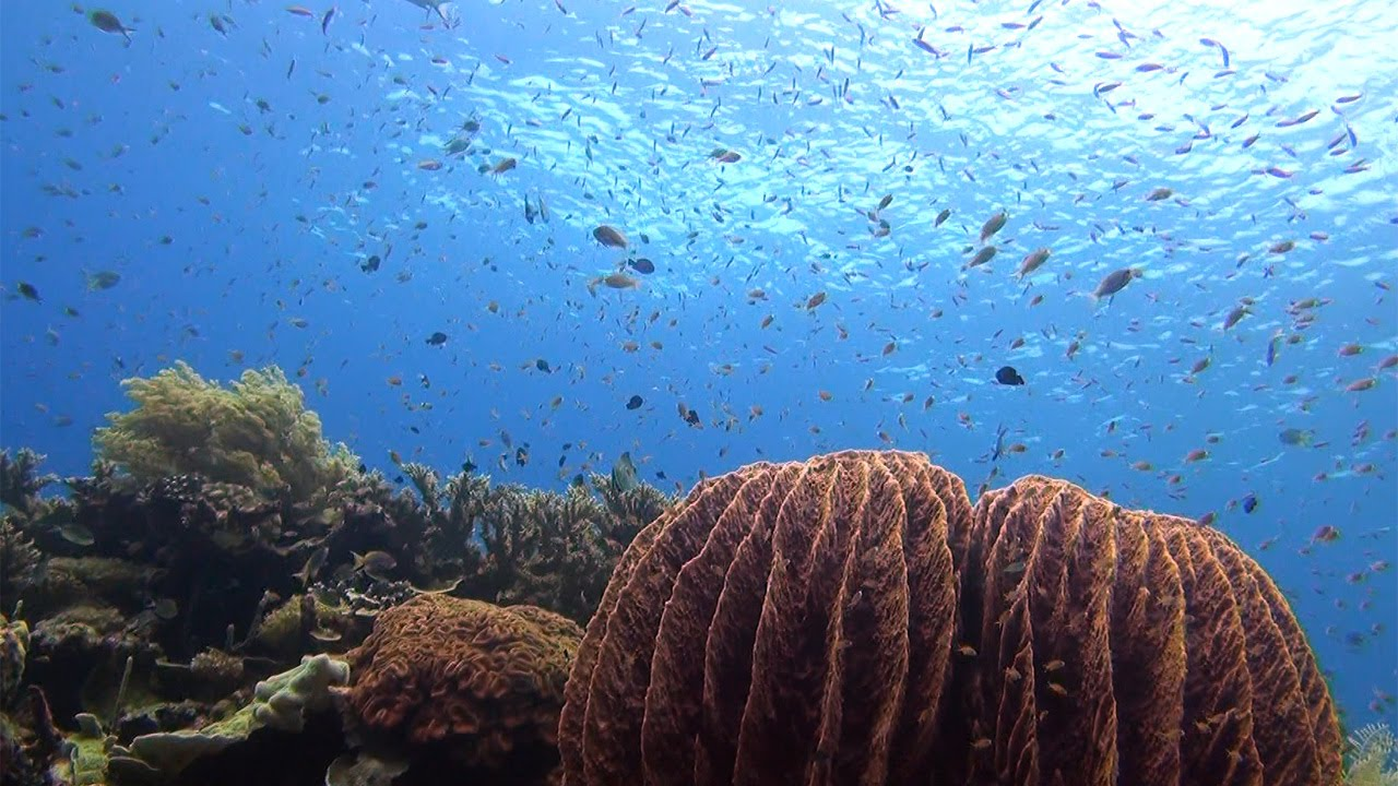 Korallendreieck
