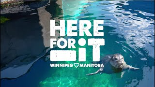 Here For It: Behind the Scenes tours at Assiniboine Park Zoo!