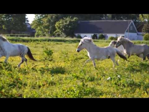 Vallaken Lukas - Min hest
