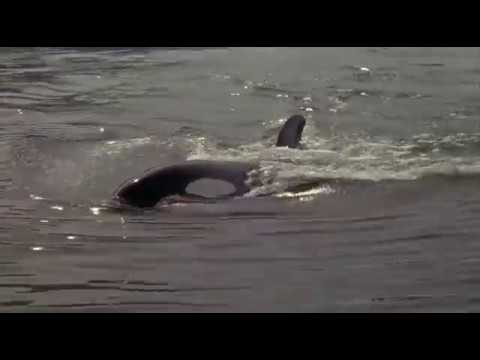 Watch Free Willy 3: The Rescue For Free Online 123movies.com