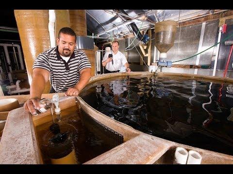 2013 Aquaculture Innovation Workshop: Industry Leaders