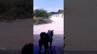 Скульптура собаки - первый выход в свет
