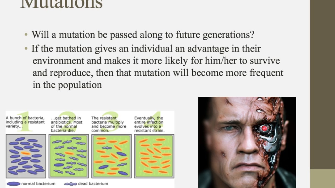 ib bio hl chap 1 cell We provide ib biology quizzes and free ib biology online ib biology tutor 15 common to sl + five of core and 20 on the ahl ie additional higher level).