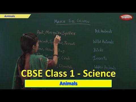 Animals | Class 1 CBSE Science | Science Syllabus Live Videos | Video Training