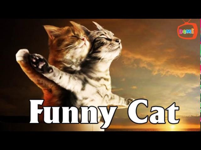 Mèo đi toilet kiểu 2017 :)))