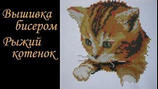 Вышивка бисером.  Рыжий котенок . Проба китайского бисера. Отчет 1
